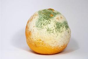 pleseň na pomaranči