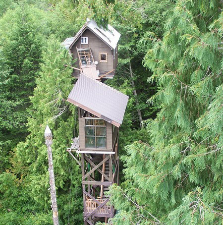 dom na strome