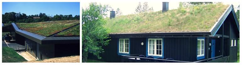 dom so zelenou strechou
